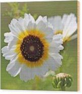 Chrysanthemum Named Polar Star Wood Print