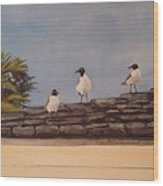 Cinco Seagulls Wood Print