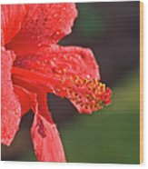 Close Up Of A Red Hibiscus Wood Print