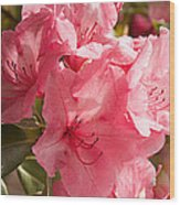 Close-up Of Pink Flowers In Bloom Wood Print