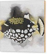 Clown Triggerfish No 01 Wood Print
