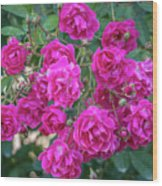 Cluster Of Roses Wood Print