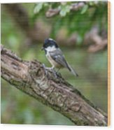 Coal Tit Wood Print