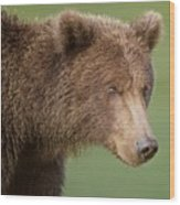 Coastal Brown Bear Wood Print