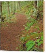 Coastal Trail Wood Print