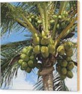 Coconut Tree Wood Print
