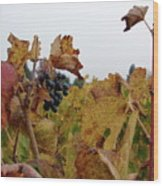 Colchagua Valley Vineyard  Wood Print