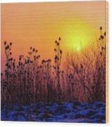 Cold Silence Wood Print