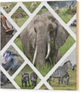 Collage Of Animals From Tanzania  Wood Print