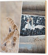 Collage Of Winter Grass Wood Print