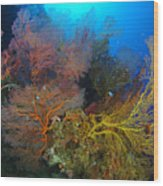 Colorful Assorted Sea Fans And Soft Wood Print