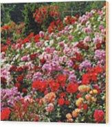 Colorful Spring Rose Garden Wood Print