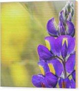 Colors Wood Print