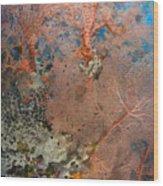 Colourful Sea Fan With Crinoid, Papua Wood Print