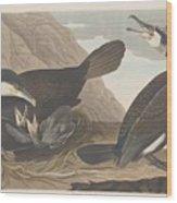 Common Cormorant Wood Print