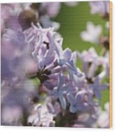 Common Purple Lilac Wood Print