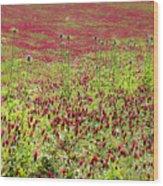 common sainfoin Onobrychis viciifolia Wood Print