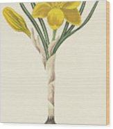 Common Yellow Crocus Wood Print