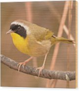 Common Yellow-throat Wood Print