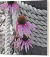 Coneflowers Wood Print