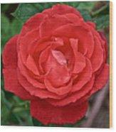 Coral Rose At Pilgrim Place In Claremont-california Wood Print