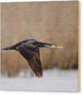Cormorant In Flight Wood Print