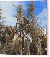 Corn Stalks Drying In The Sun Wood Print