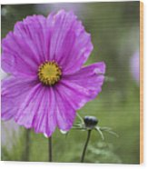Cosmos Flower Wood Print