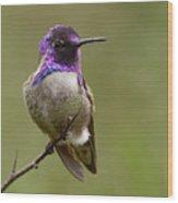 Costa's Hummingbird, Solano County California Wood Print