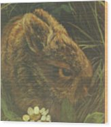 Cottontail Young Wood Print