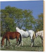 Country Horses Wood Print
