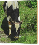 Cow In A Field Wood Print