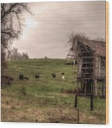 Cows In A Field By A Barn Wood Print