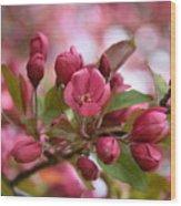 Crab Apple Blossom Wood Print