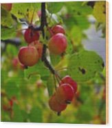 Crab Apples Wood Print