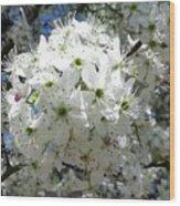 Crabapple Blossom  Wood Print