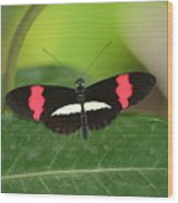 Crimson Patched Longwing Wood Print