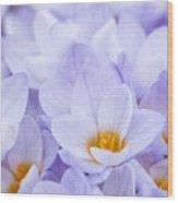 Crocus Flowers Wood Print