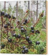 Crowberry Wood Print