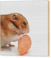 Curious Hamster 1 Wood Print