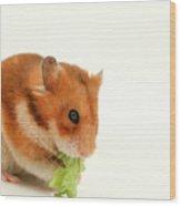 Curious Hamster Wood Print