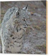 Curious Wandering Bobcat Wood Print