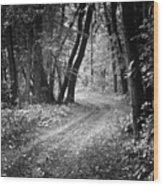 Curving Trail Entering Deciduous Forest Wood Print