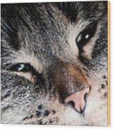 Cute Cat Close-up Portrait Wood Print