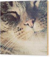 Cute Small Cat Portrait Wood Print