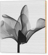 Cyclamen Flower X-ray Wood Print