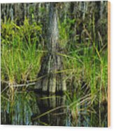 Cypress Tree Wood Print