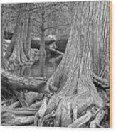 Cypress Trees I V Wood Print