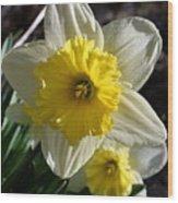 Daffodil Days Wood Print