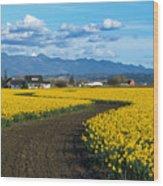 Daffodil Lane Wood Print